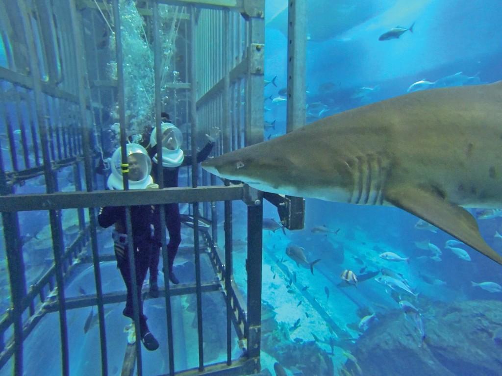 Купание с акулами в ОАЭ
