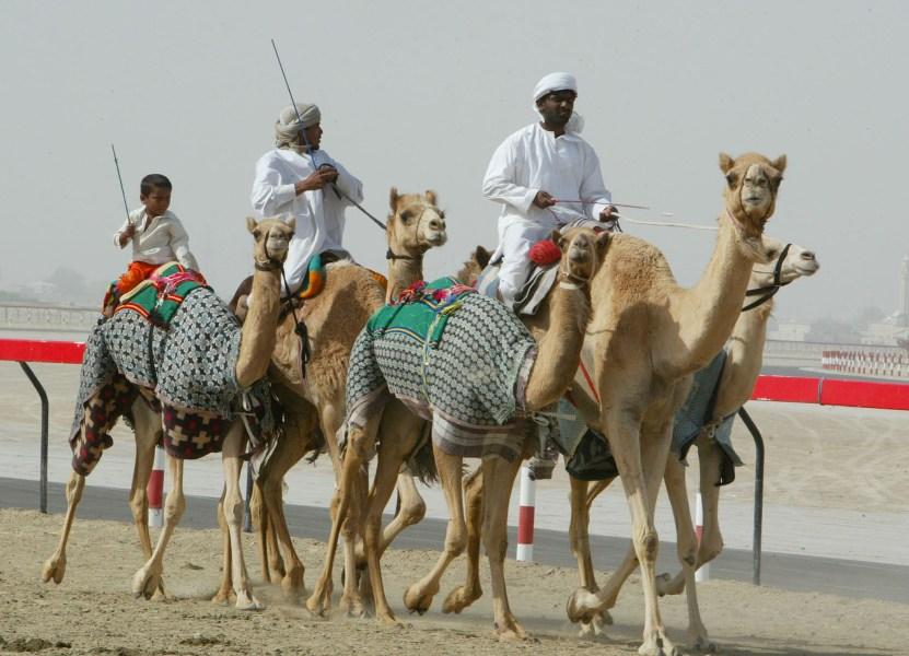 Рас-аль-Хайма, верблюжьи бега