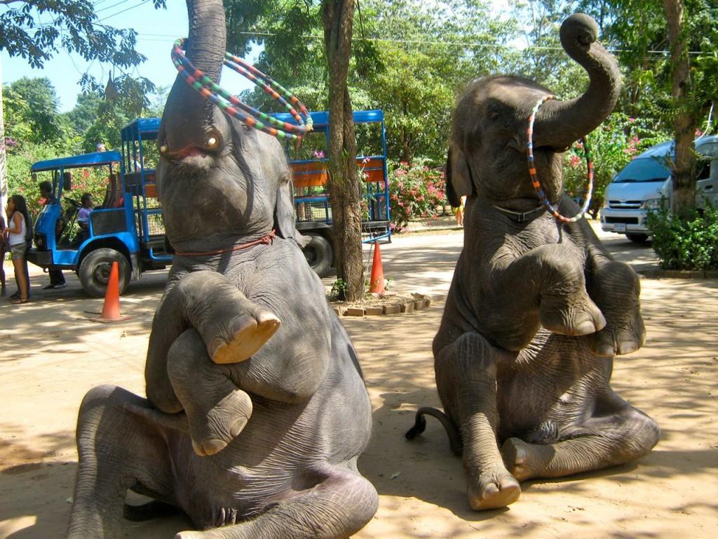 Деревня слонов, Паттайя