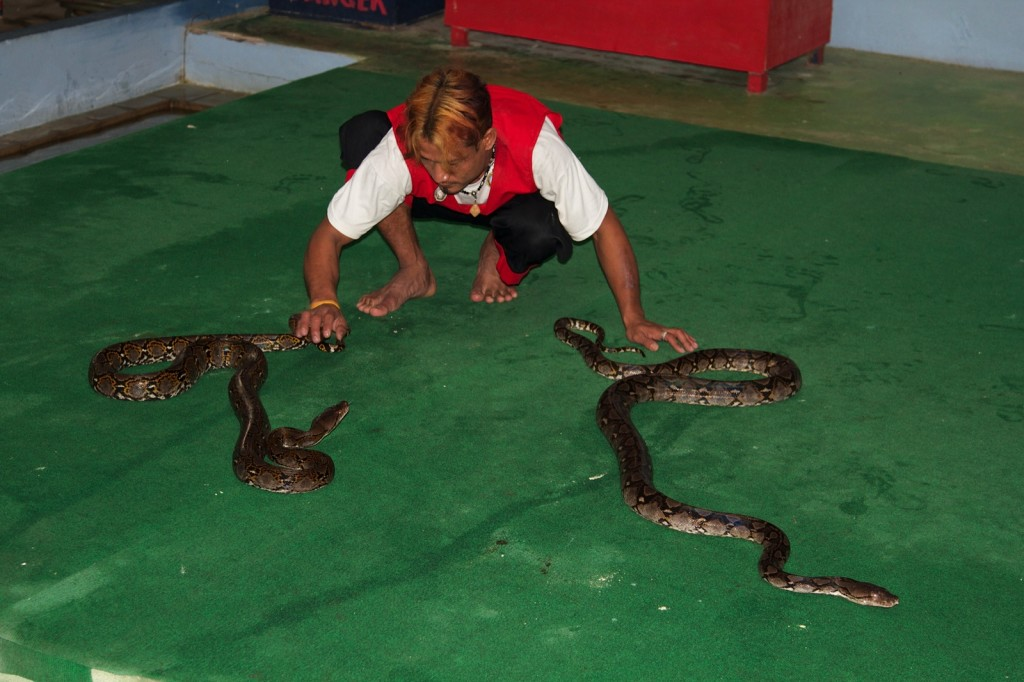 Змеиная ферма на Самуи