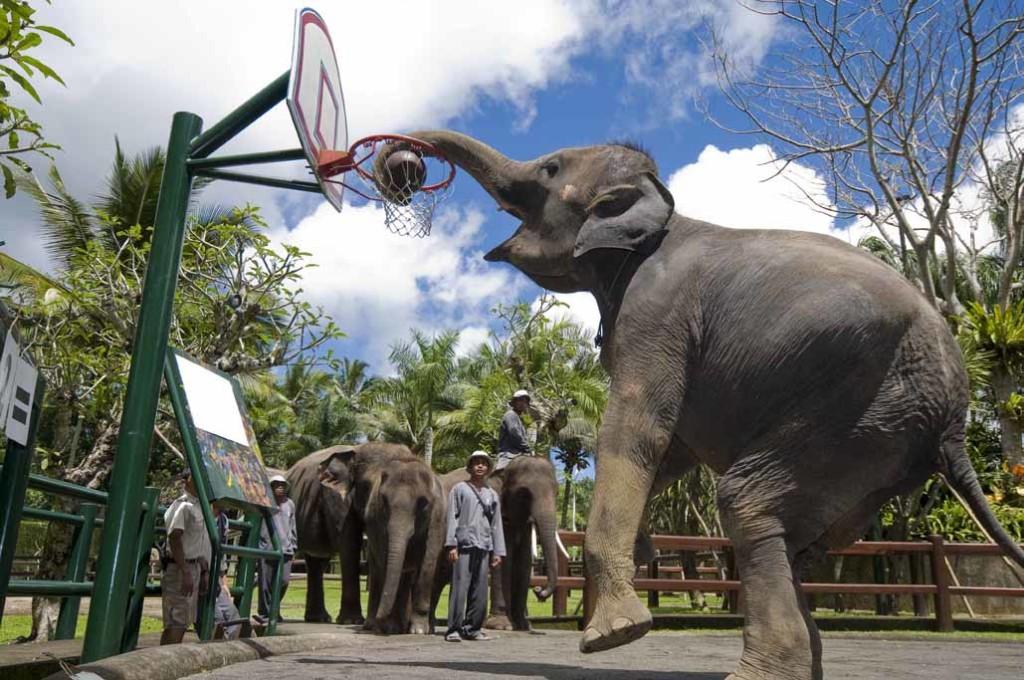 Сафари парк, остров Бали