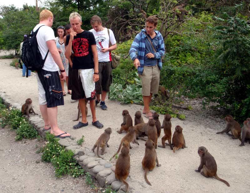Нячанг, Остров обезьян