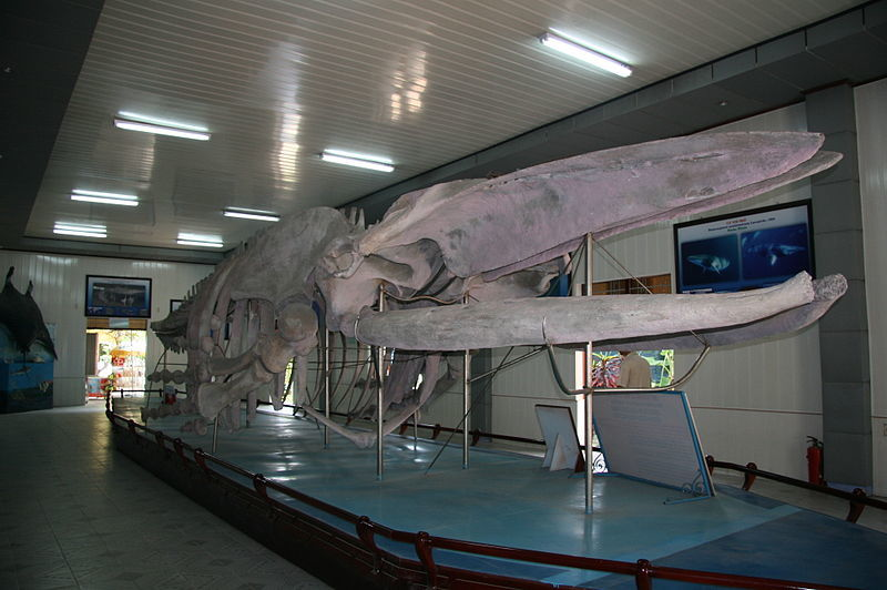Океанографический институт