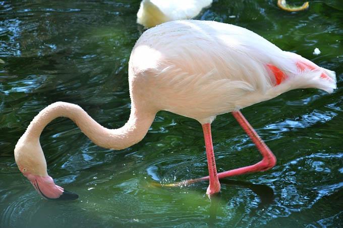 Парк птиц, Агадир