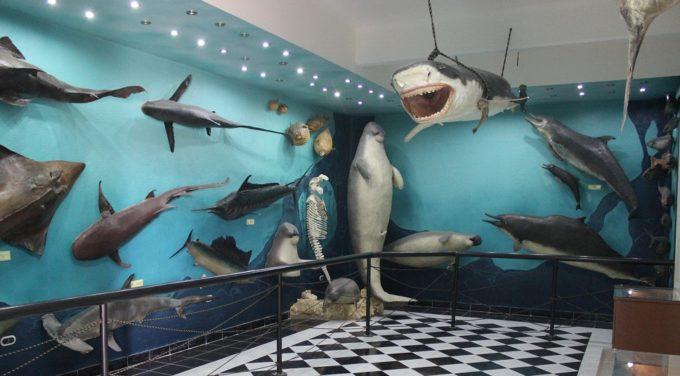 Музей морской биологии, Хургада